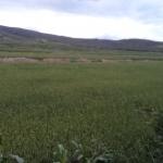 Vendo terreno agrícola y ganadero